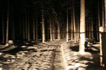 Frost Forest von Marine d.