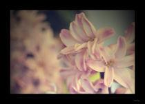 In bloom by Marta Xerra