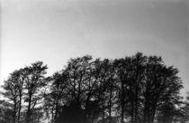 Treidene Trees von Eigil Korsager