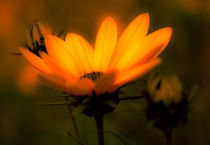 Blume-1-von-1