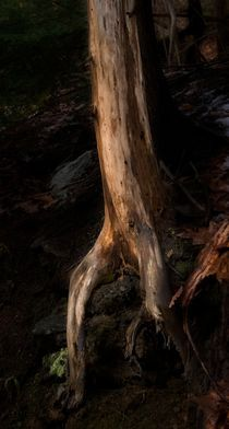 Tree Roots 2 by Michael Del Rossi