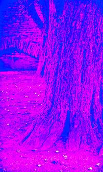Baum-vor-mauer-1-von-1