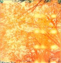 Orange Juice von Chiara Effe
