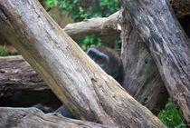 Gorilla by Melissa Little