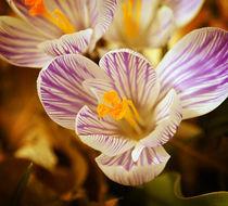 Fall Flower von Crystal Kepple