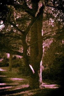 Baum-1-von-1