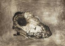 dog's skull von angelogamma