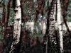 Zauberwald-02-die-wchter-watermarkedjpg