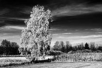 Herbstspaziergang-grafrat-iii-2