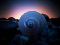 snail shell von Justin Lundquist