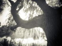 willow_1 von Justin Lundquist