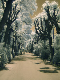 infrared alley by Mihail Leonard Bodor