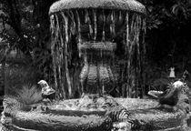 Fountain by RicardMN Photography