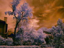 infrared park with magenta selective filter by Mihail Leonard Bodor
