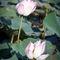 Photasia-cambodia-phnom-tamao-20111104-img-1170