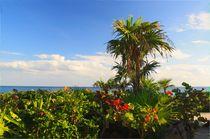 Naturstrand an der mexikanische Karibikküste by Marita Zacharias