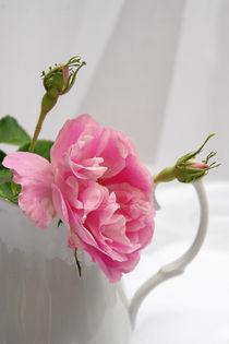 Rosarotes Röschen von pichris