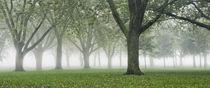 Foggy Dew by Sebastian Petrescu
