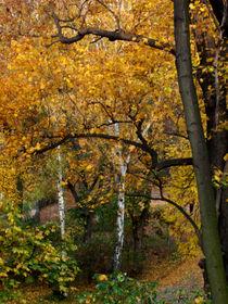 Herbst in Berlin,  Herbst,    ansicht von oben von Simone Cuambe