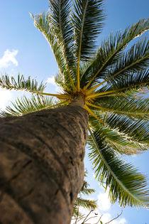 Palm Tree von Guy Miller