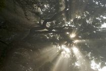 Morning fog in tree branches by Stas Kalianov