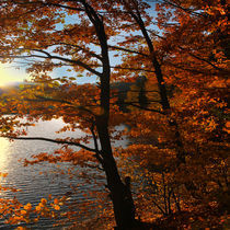 Red-autumn-tree