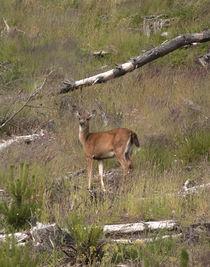 Bambi-11x14