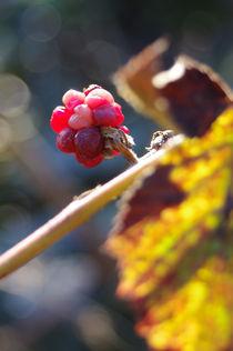 autumn love by daniela scharnowski