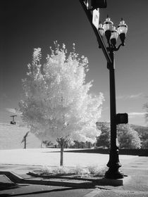 Urban Tree von © Joe  Beasley