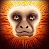 mico by Diogo Ferreira da Silva