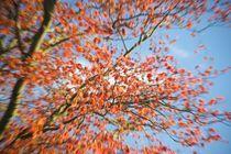 Spring leaves go Kaboom! von Stas Kalianov