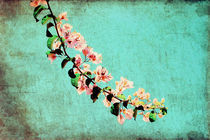 Just a branch between the sky by Constanza Caiceo
