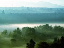 Seek through the fog by Constanza Caiceo