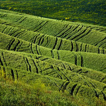 Tuscan-fields