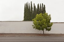 Trees (in Glendale, CA) by Jeff Seltzer