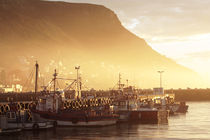 Fishing Boats at Dawn, Kalk Bay, South Africa by Neil Overy