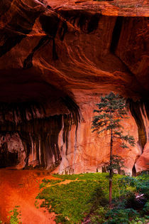 Zion by David Pinzer