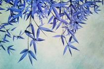 Bluebamboo