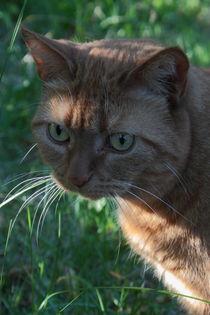 rote Katze von Christine Bässler