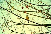 Bird of pray by Constanza Caiceo