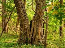 Magic trees. by Maks Erlikh