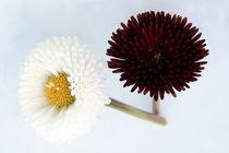 Blütenposter by Jens Berger