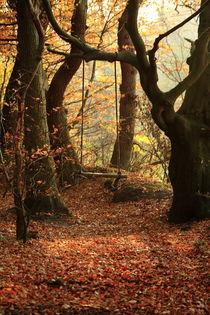 Waldschaukel von michas-pix