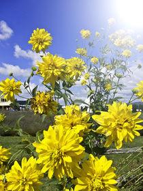 FLOWER POWER von Georgina Avila