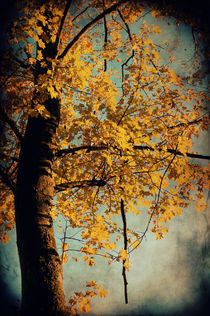 Herbstzeit  by AD DESIGN Photo + PhotoArt