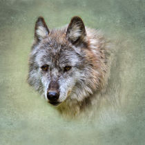 Grey Wolf by Louise Heusinkveld