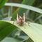 Front-grasshopper