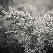 Early morning's magic by Lina Gavenaite
