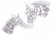 Giraffe-mom-and-baby