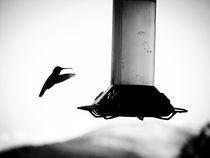 Colibri von Noe Casas